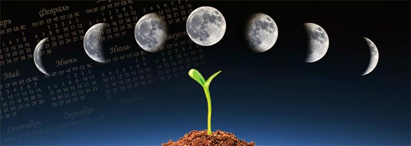 Семена конопли всходят приборы для выращивания конопли