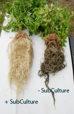 SubCultureБиозащита для корневой системы