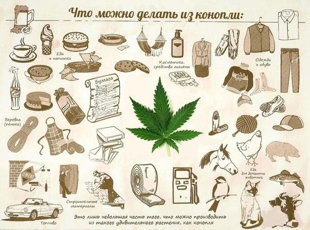 Ответь что конопля сколько марихуана выводится из организма